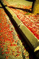 Red Petals on Pavement 3