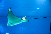 Stingray at Eilat Observatory 5