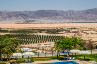 Swimming Pool, Date Palms and Hills of Jordan 3