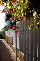 Fence and Flowers 180704-1