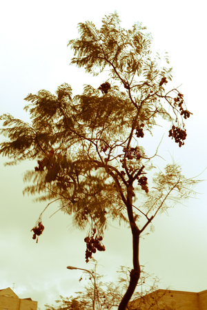 Trees in Wind 2