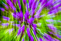Lavender Abstract 4