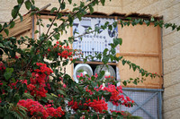 Ventilated Sukkah in Red Foliage