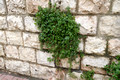 Even Walls Blossom in Israel