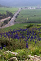 Hilltop Lupins with Highway #375 in Background 1