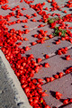 Red Petals on Pavement 4