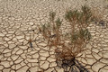 Parched Earth in Negev 150930-2