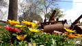 Flowers and Roller Canons 5