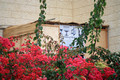 Sukkah in Red Foliage