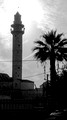 Ramle Minaret and Tree 2