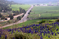 Hilltop Lupins with Highway #375 in Background 2